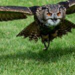 Kasteeltuinen Arcen – Eulen, Falken und anderes Federvieh