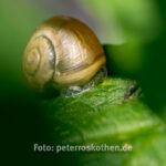 Schnecke - Tierfoto Canon 7D