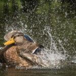 Tierfoto Canon 7D