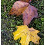 Nur wunderschöne Blätter