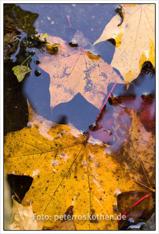 Herbstfotos selber machen - 10 Tipps für wunderschöne Herbstbi