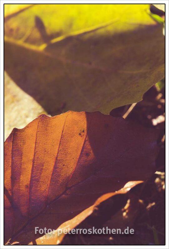 Farbkontraste und Strukturen im Herbstlaub