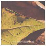 Blätter in leichtem Understatement