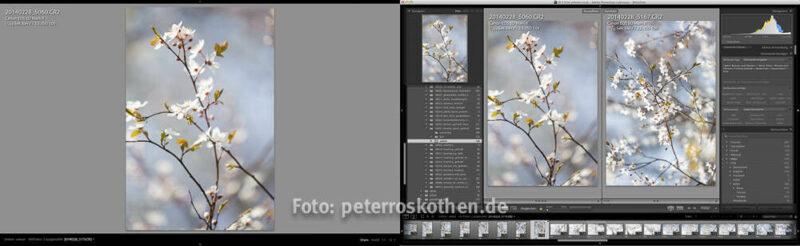 Fotokurs Lightroom Classic CC oder Lightroom 6 lernen - Schulung Bildbearbeitung lernen