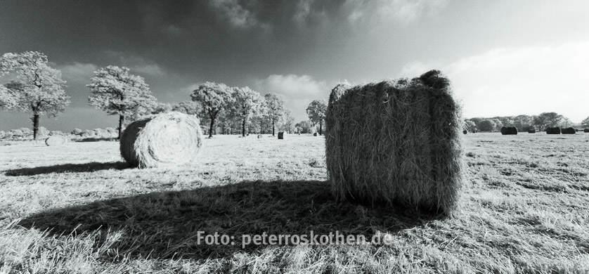 Infrarotfoto mit umgebauter Canon EOS 5D