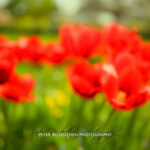 Fotoexkursion mit Peter Roskothen Botanischer Garten Krefeld