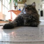 Katzen Fotos