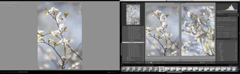 Fotoverwaltung Sofware Lightroom