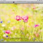 Kostenlose Bildbearbeitungssoftware