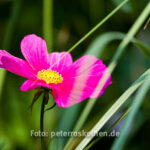 Makrofoto Blume