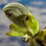 Vorbereitungen des Pflanzenfotografen für den Frühling