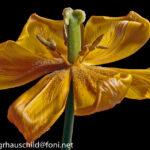 Pflanzenfotografie – Die Schönheit des Vergehenden