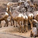 Burgers Zoo Desert und Mangroven – Teil 2
