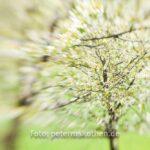 Lensbaby Fotos