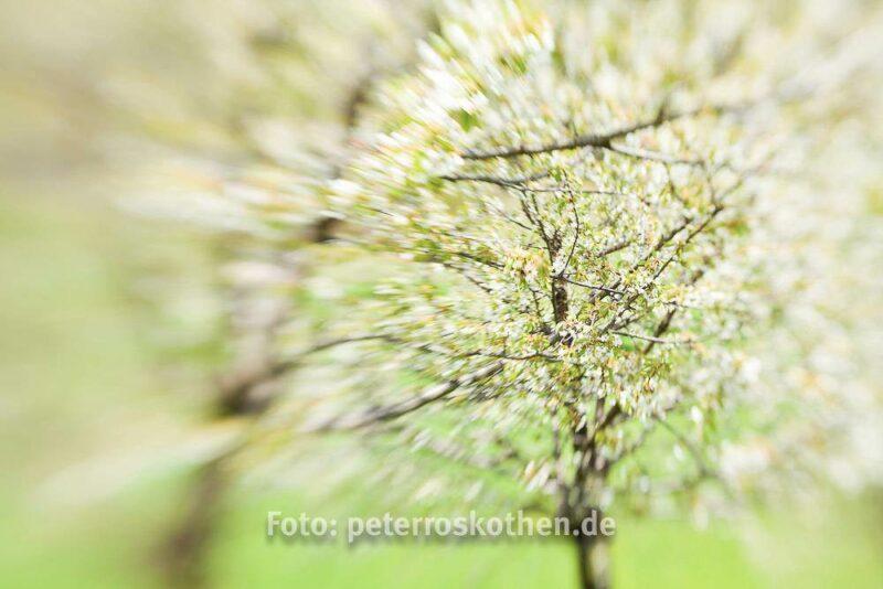 Lensbaby Composer Fotos