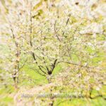 Lensbaby Naturfotografie
