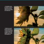 Naturfotografie Sonneblume - Jana Mänz - Franzis Verlag
