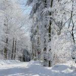 Bayerische Wald – Hoher Bogen