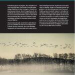 Naturfotografie Nebel - Jana Mänz - Franzis Verlag