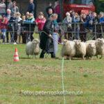 Schafehüten mit Border Collie - Dorenburg, Grefrath, Mairitt, Pferde