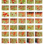 100 Fotos von einem Objekt, Mohn als Droge, Tamron 150-600mm, Tamron 150 600