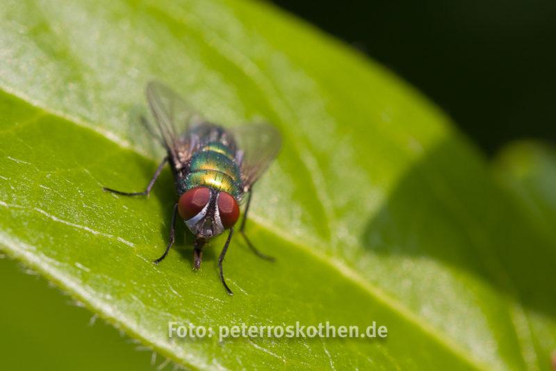 Insekt - Tierfoto Canon 7D