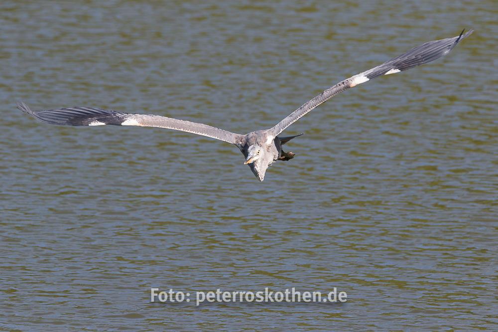 Wildlife Fotografie mit Canon 7D Mark II und Tamron 150-600