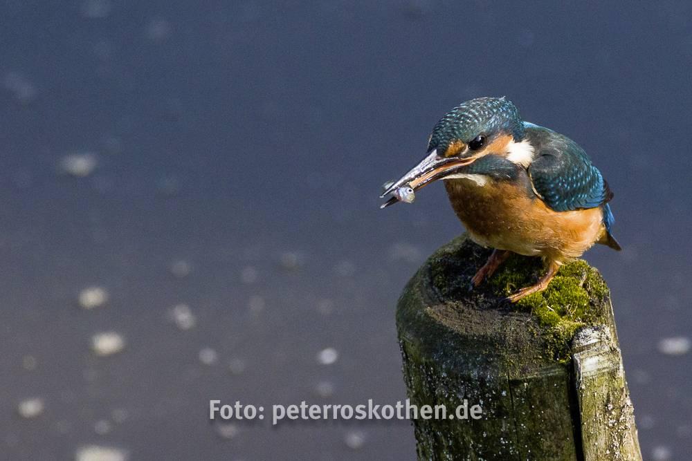 Wildlife, www.fotowissen.eu, Denoise Projects Professional, Bild