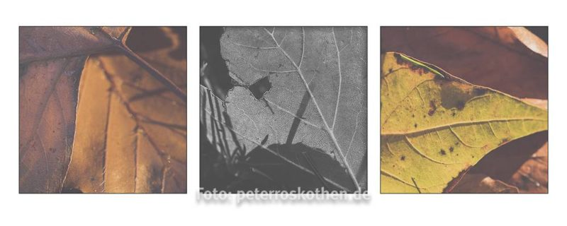 Herbstfoto-Collage