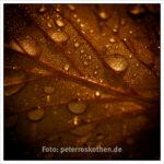 Tropfen in Herbstgold