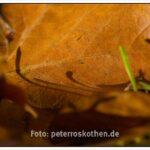 Das Blatt und der Schatten anderer Blätter