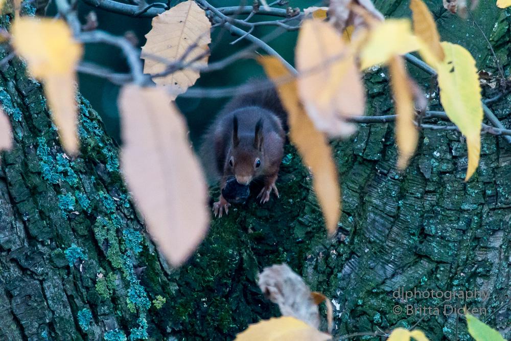 Das lange Warten oder wie ich endlich mein Eichhörnchen erwischte