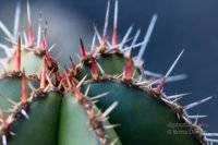 Lanzarote - Jardin de Cactus