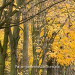 Foto im Herbst - Tamron SP 150-600mm F/5-6.3 Di VC USD G2, Wildlife Fotografie