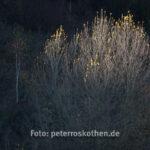 Herbstfoto mit EOS 7D II und Tamron SP 150-600mm G2 Telezoom