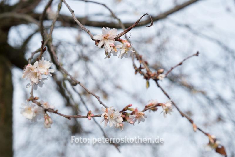 Fujifilm Testfoto - Blüten im Winter