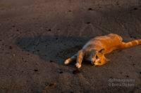 Die Katze am Strand oder wie man Fotografen erfolgreich ablenken kann