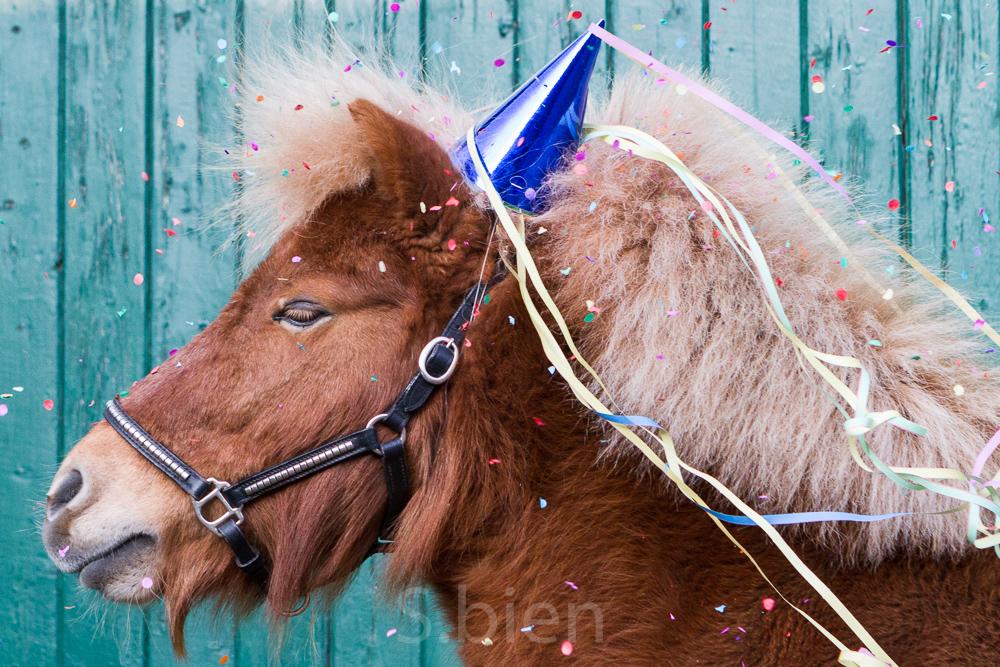 Karneval im Pferdestall