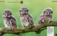 Digitalphoto Augenblick Heft Inhalt Tierfoto