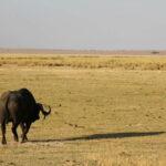 Kenia – wunderschönes Afrika, den Tieren ganz nah