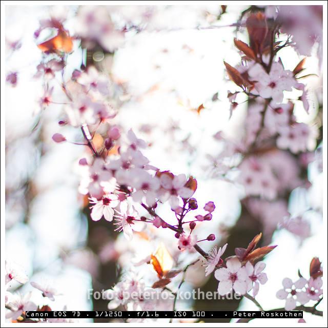 Leichtigkeit der Blüte