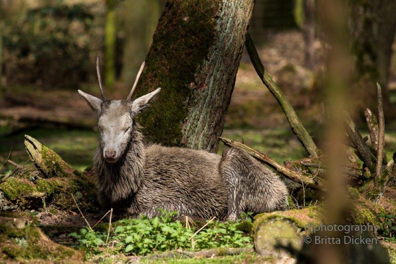 Wildtierpark Gangelt