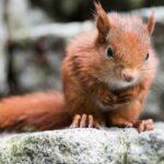 Eichhörnchen Baby im Garten