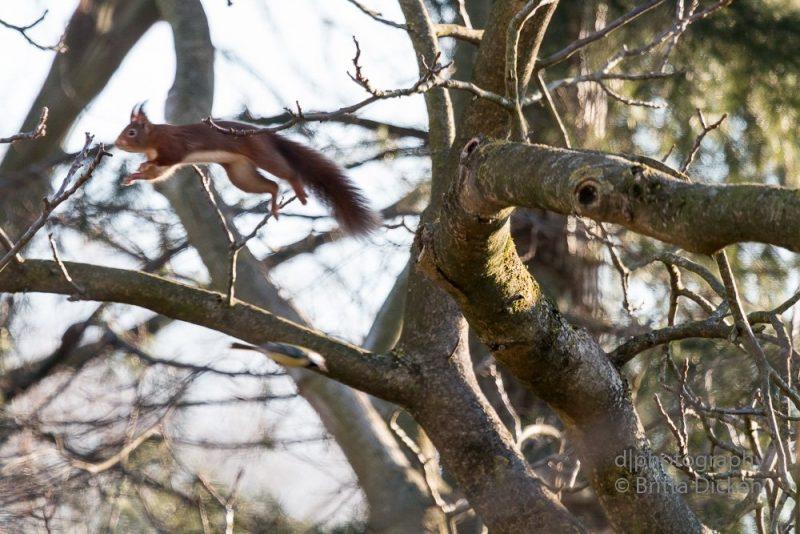 Eichhörnchen und Co