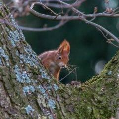 Eichhörnchen und Co – Besuch im Garten