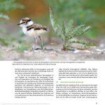 flussregenpfeifer praxisbuch vogelfotografie