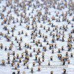kormorane praxisbuch vogelfotografie