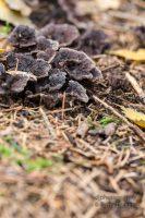 Pilze, Pilze und noch mehr Pilze