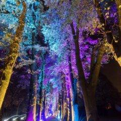 Enchanted Gardens 2017 in Arcen