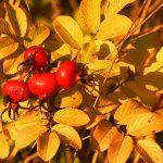 Herbstspaziergang im Eichsfeld mit der Nikon D850
